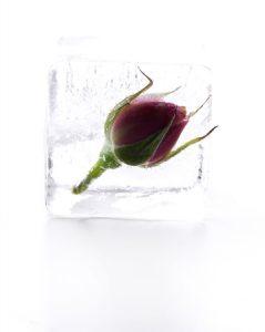 41749452 - frozen rose in ice cube